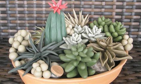 giardino con piante grasse coltiva il tuo giardino con piante grasse
