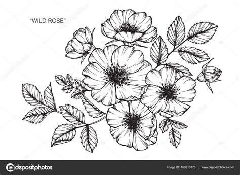 bloem tekenene wild rose bloem tekenen en schetsen met zwarte en witte