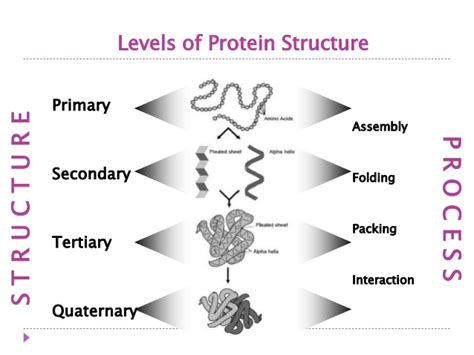 4 protein structures protein structure