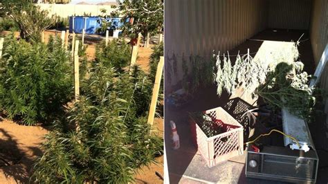 Warrant Search San Bernardino Yucca Valley Marijuana Bust Nets 378 Plants 2 Lbs Of