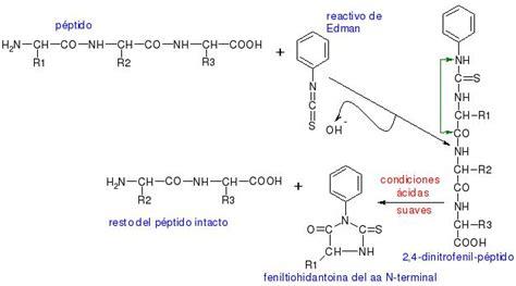 rompiendo cadenas meaning bioquimica
