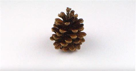 how to make christmas trees out of pine cones