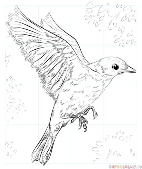 how to draw doodle birds how to draw a blue bird step by step drawing tutorials