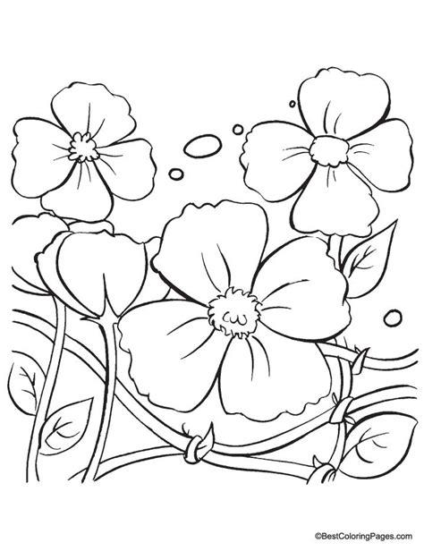 Papaveraceae Poppy Flower Coloring Coloring poppy flowers coloring pages coloring page of a poppy flower
