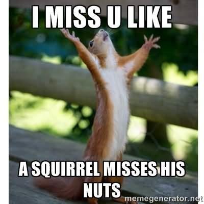 Miss U Meme - squirrel memes i miss u like a squirrel misses picsmine