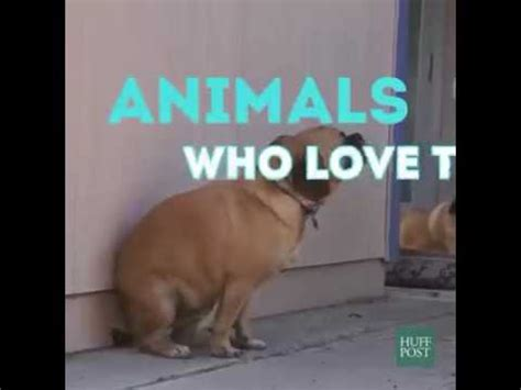 funny animals dancing (dogs cats birds)