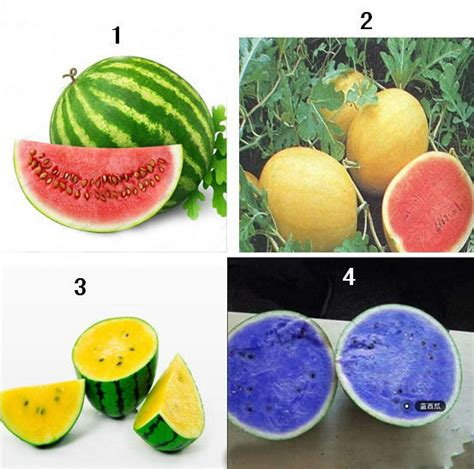 3 fruit types types of watermelon plants www imgkid the image