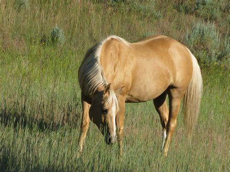 Barn Mice My Dream Horses Friesian And Quarter Horses Barnmice