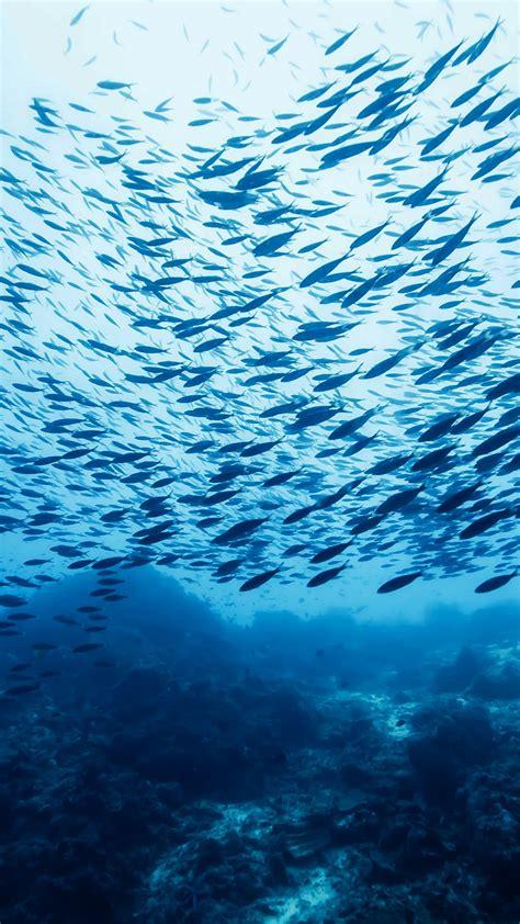 wallpaper fish school castle rock ocean pacific atlantic indian water blue bottom
