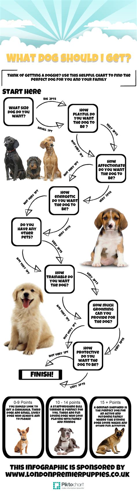 should i get a puppy what should i get infographic visualistan
