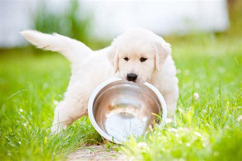 alimenti per gattini come alimentare cuccioli e gattini da appena nati ad adulti
