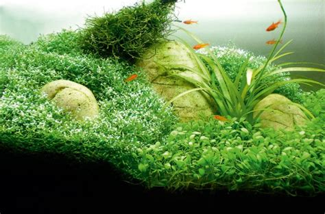 Aquascape How To by How To Aquascape Small Tanks Practical Fishkeeping Magazine