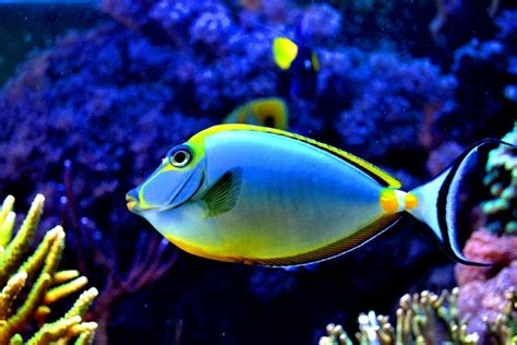 top 50 beautiful fish facts photos colorful wallpapers