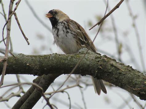 central ohio birds help me identify a bird whatbird