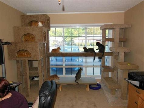 Catok Codos killer cat condo mine would this rrrcattreeplans cool make cat condo