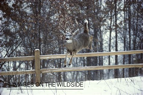 jumping fence deer jumping fence car interior design