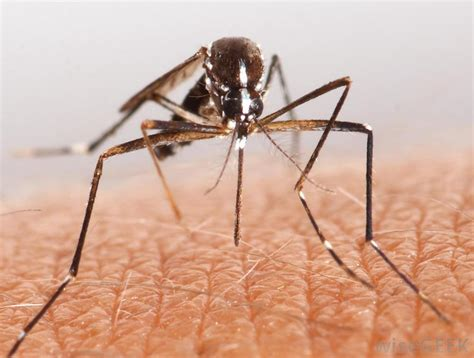 what is the best way to eliminate mosquitoes from my home