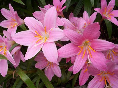 imagenes todo flores decoraci 243 n f 225 cil flores de oto 209 o