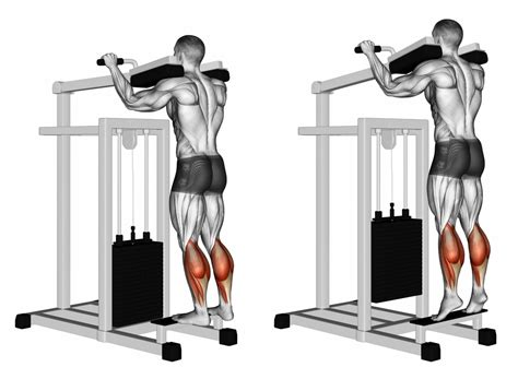 smith machine seated calf raise foot position on calf raises explained ignore limits