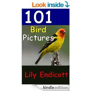 let s learn about unique birds letã s learn about animals books free children s animal guides for kindle s wandering