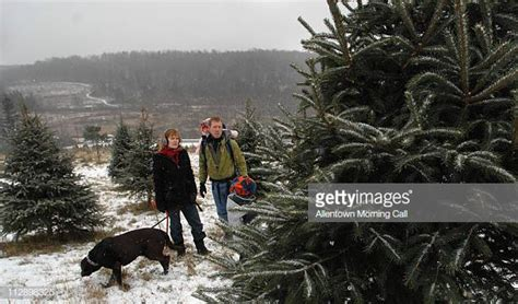 christmas tree farms allentown pa allentown pennsylvania stock photos and pictures getty images