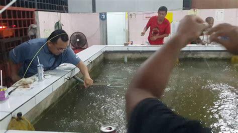 Pancing Udang Galah pancing udang kolam sg ara penang versi on the spot