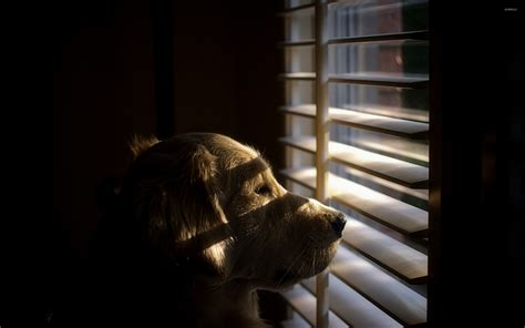 looking out window looking out the window 2 wallpaper animal wallpapers 42461