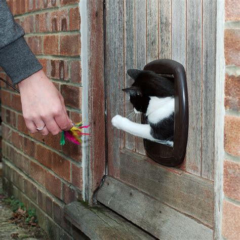 can you train a cat to go outside for bathroom training your cat to use the cat flap