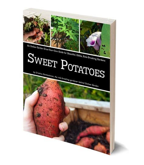 grow your own sweet potatoes outlaw garden sweet potato grow guide outlaw garden