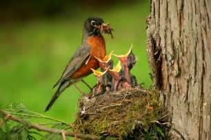 feed me hungry cute little baby birds pix o plenty