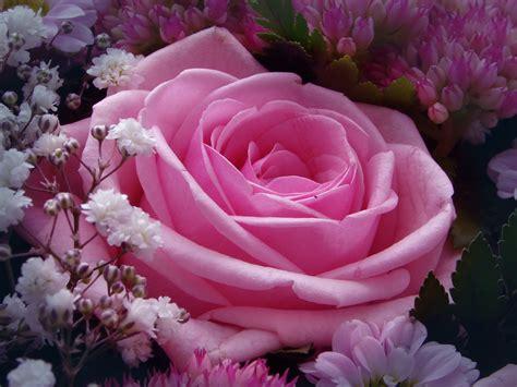 Merah Ros gadis kung rahsia warna bunga