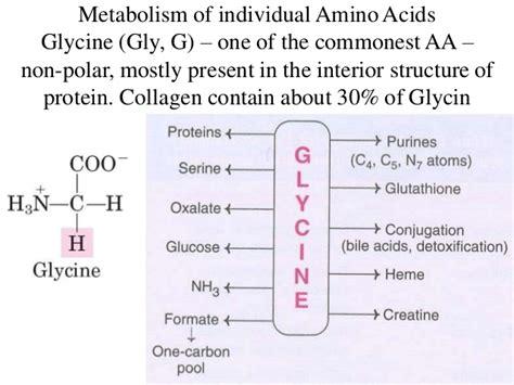 Glycine Detox Nonpolar by Metabolism Of Amino Acids