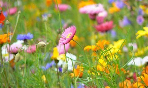 colori dei fiori quel mazzolin di fiori meteweekend it