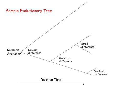 section 18 2 modern evolutionary classification ppt modern evolutionary classification notes ch 18 2