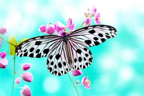 imagenes con mariposas bonitas 30 mariposas coloridas im 225 genes para compartir por