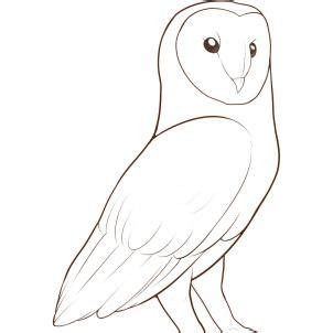 how to draw a barn owl step by step birds animals free