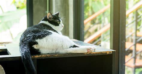 perdere sangue dal sedere perch 233 il gatto mostra il sedere al proprietario greenstyle