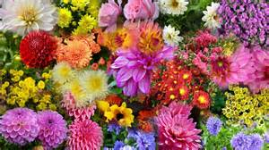 Autumn Flowers For The Garden Nature Wallpapers Wallpaper Garden Autumn Flowers Landscapes Hdwallpaper Nature Wallpaper 57892
