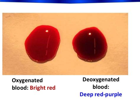 color of oxygenated blood biology form 5 chapter 1 1 2 circulatory system