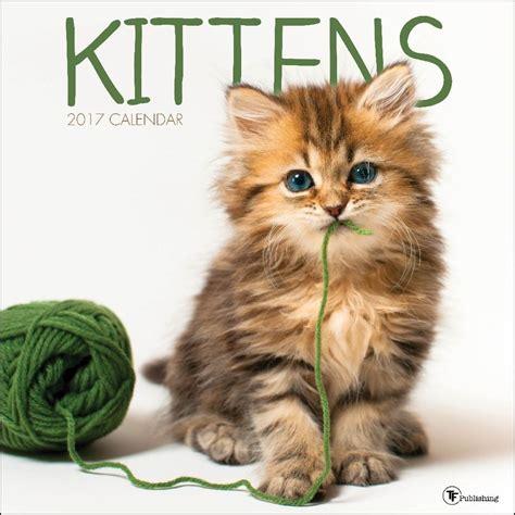 Kitten Calendar Kittens Wall Calendar 9781624386862 Calendars