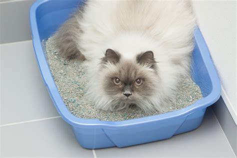 my has diarrhea what should i do my cat has diarrhea what do i do