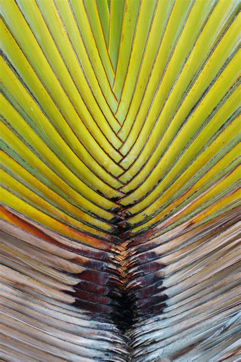 leaf pattern photography palm leaf pattern free stock photo public domain pictures
