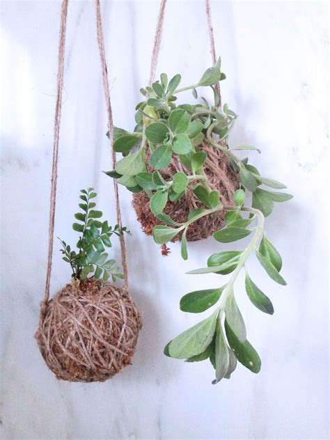 moss ball hanging plant holders great
