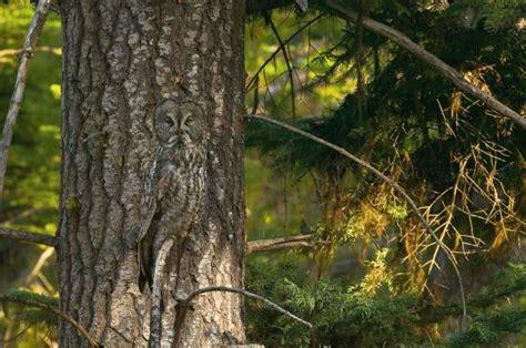 imagenes sorprendentes naturaleza sorprendentes animales camuflados en la naturaleza taringa