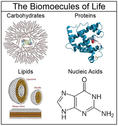 carbohydrates 9th grade biomolecules proteins structure and function of biomolecules