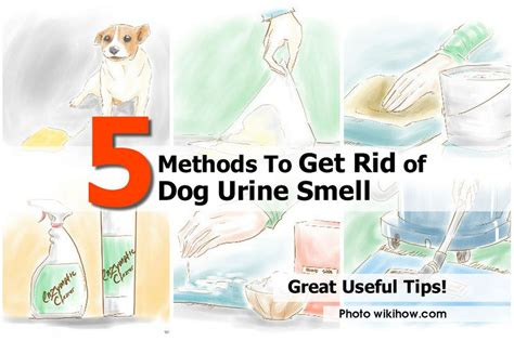 how to get pee smell out of bed ways to get rid of dog smell in house home design