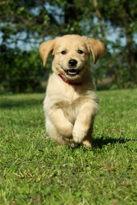when do golden retrievers stop biting lessons we can learn from dogs