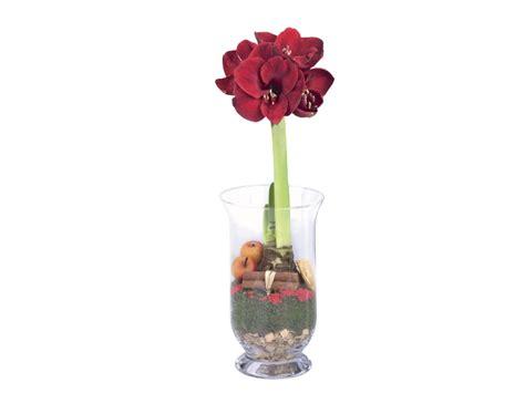 Vase Store Amaryllis In Glass Vase Lidl Great Britain Specials