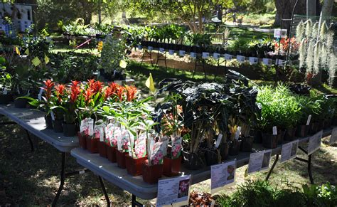 ucr today fall plant sale set  oct