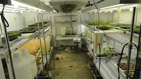 Grow Room Watering System by A Day In The Of An Arabidopsis Lab The Node